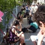 Tel Aviv, Israel: Und der Hundemarkt ...