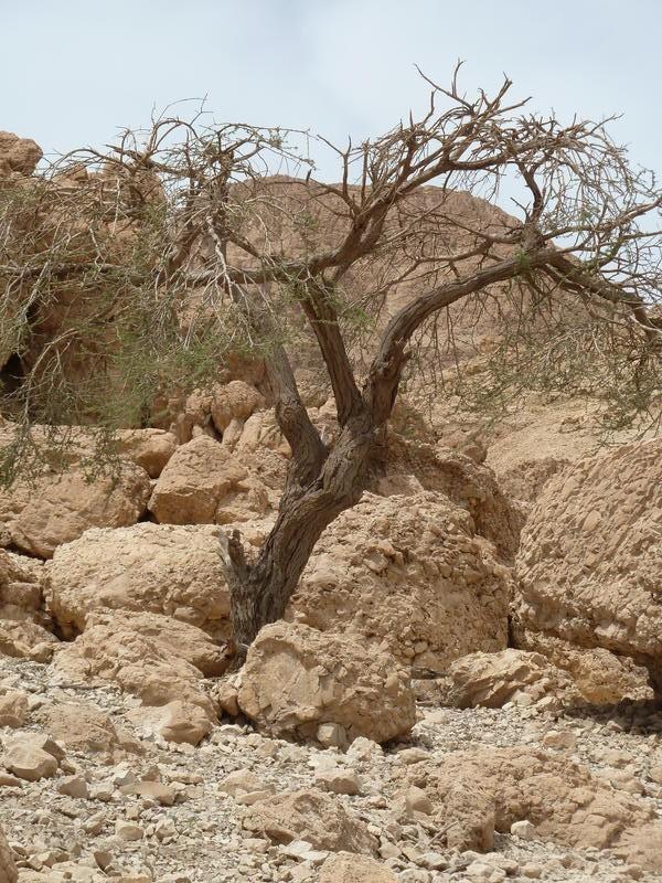 Ein Baum, zumindest war es mal einer, ganz oben in dieser Einöde