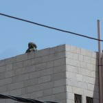 Soldat über den Dächern der Stadt